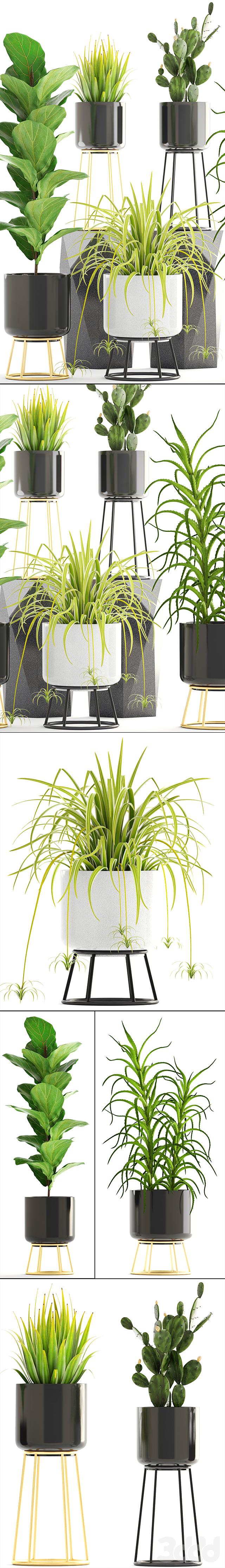 Коллекция растений 180.