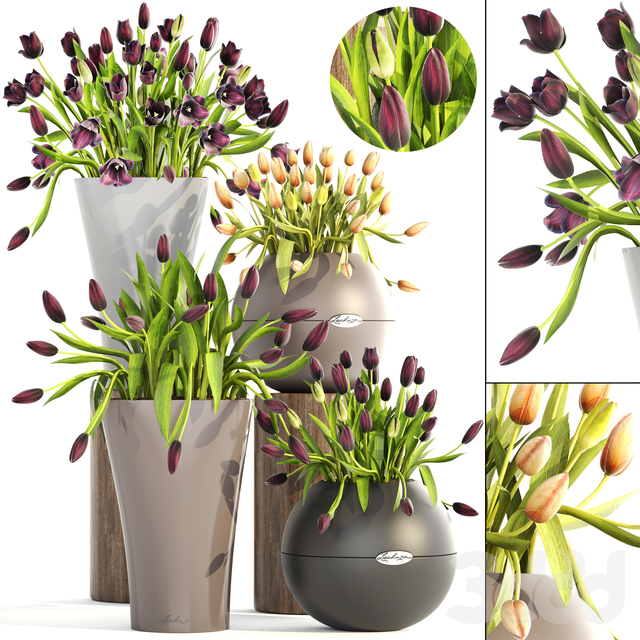 Коллекция растений 190.