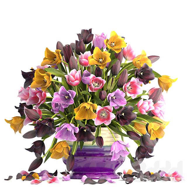Коллекция цветов 6. Тюльпаны.