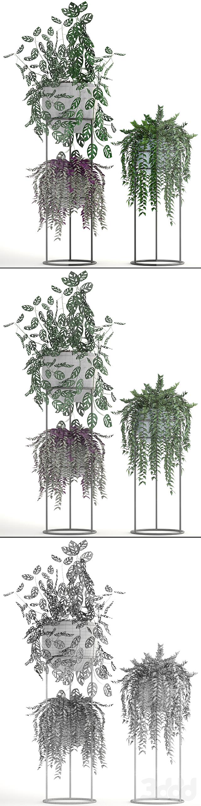 Коллекция растений 200.