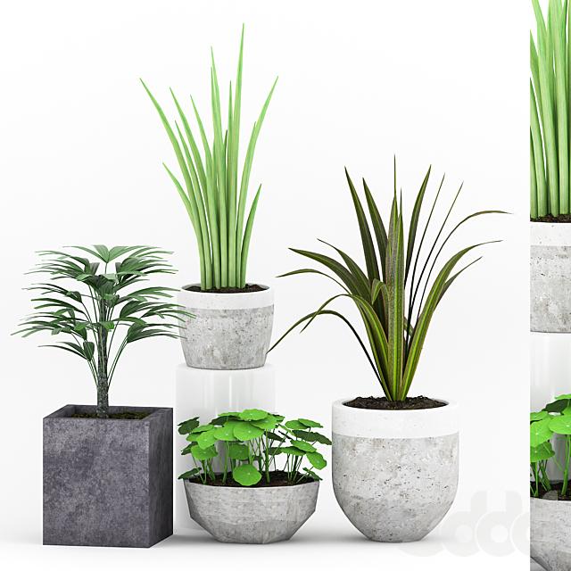 Plant 53