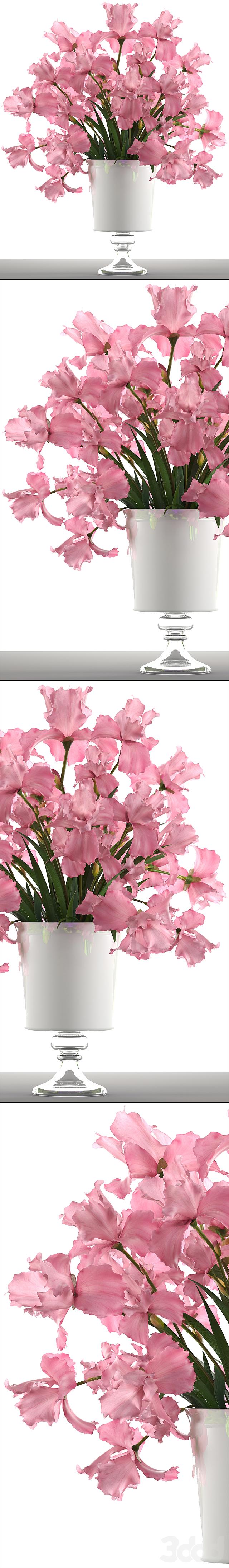Коллекция цветов 48. Розовые Ирисы.