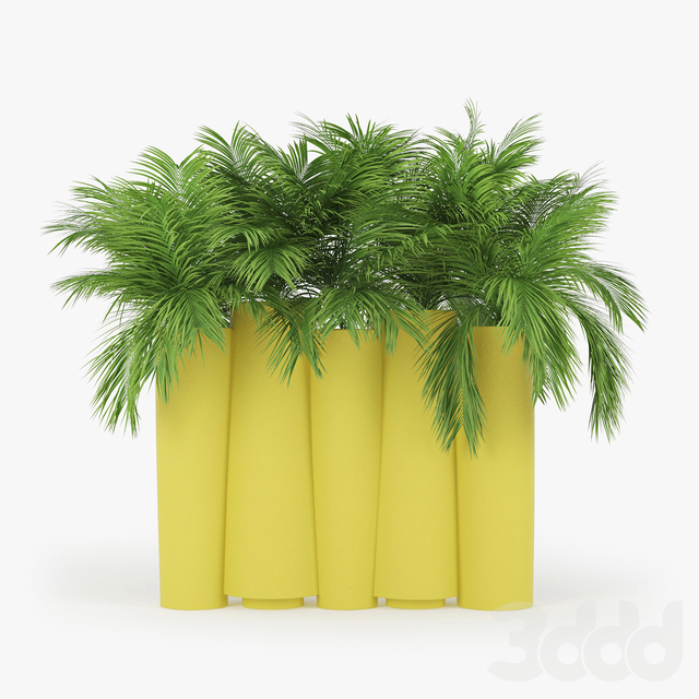 BAMBOO by Slide palm