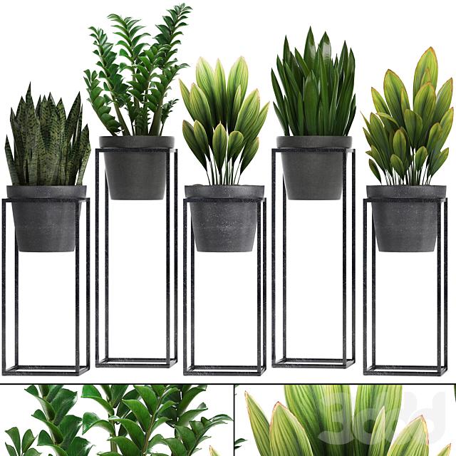 Коллекция растений 240.