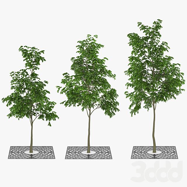 Street Tree 01