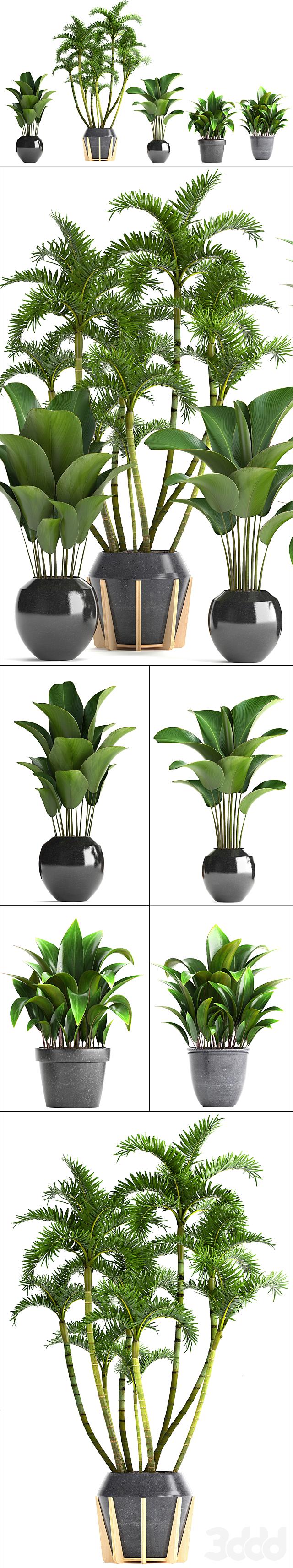 Коллекция растений 247.