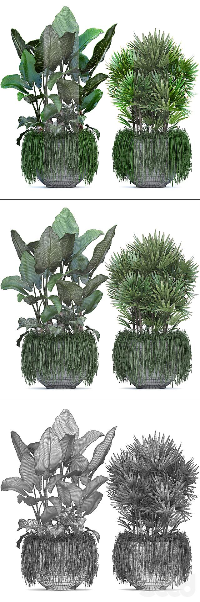 Коллекция растений 254.