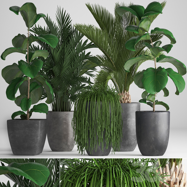 Коллекция растений 259.
