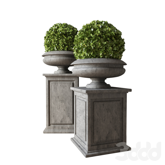 Boxwood Set 04
