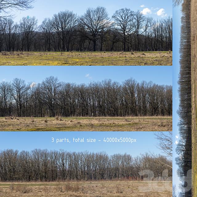 Панорама с деревьями без листьев