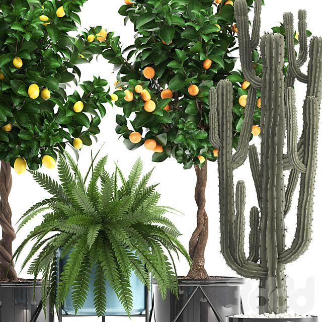 Коллекция растений 298.