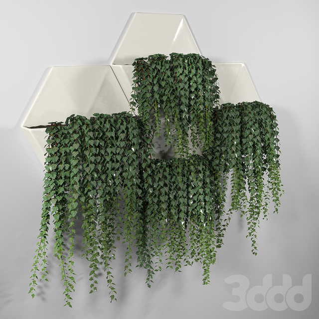 Hexagonal Honeycomb Succulent Wall Planter