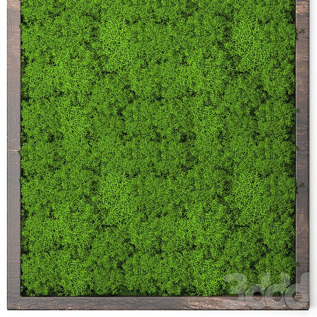 Vertical garden 24. Stabilized moss