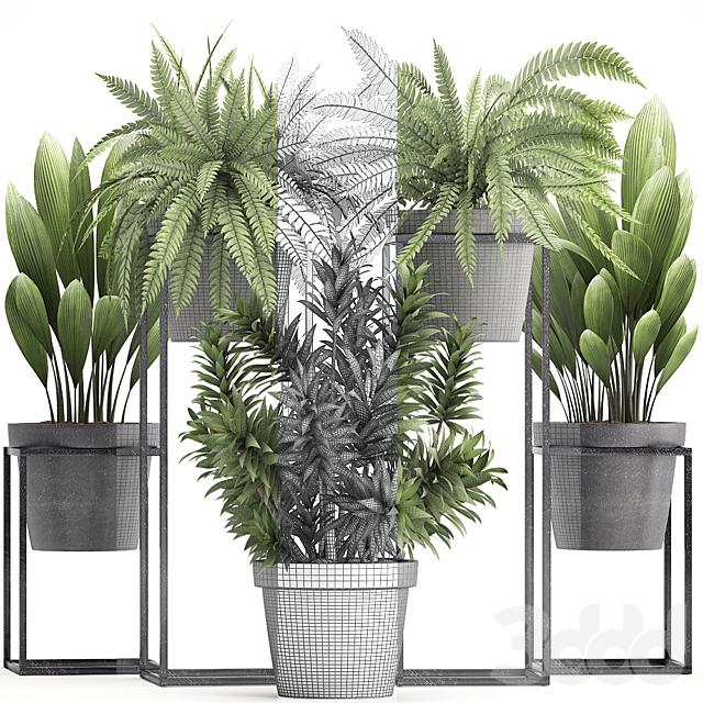 Коллекция растений 315.
