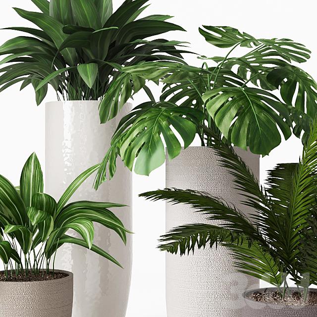 Коллекция комнатных растений 01