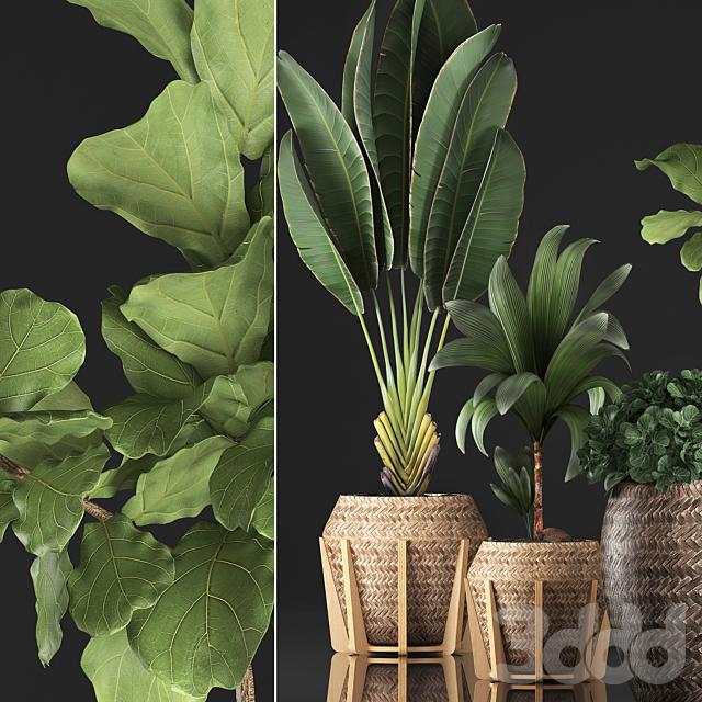 Коллекция растений 348.