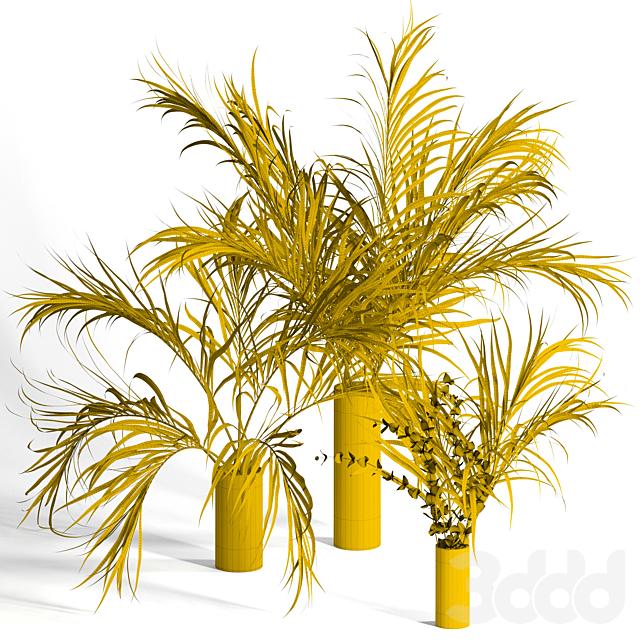 Dry palm leaves in vases