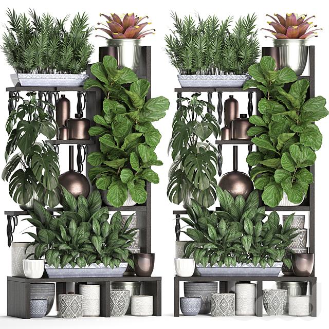 Коллекция растений 370