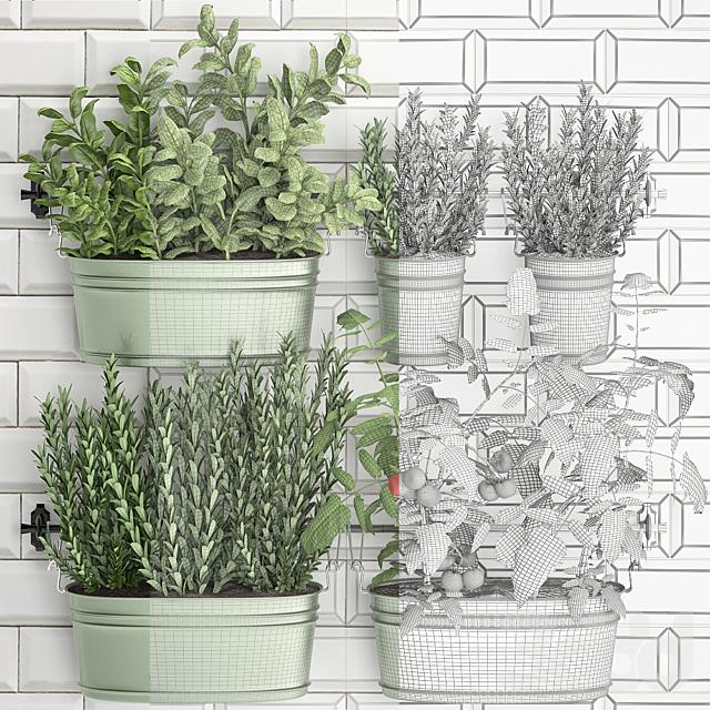 Коллекция растений 384.