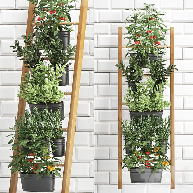 Вертикальное озеленение. 36