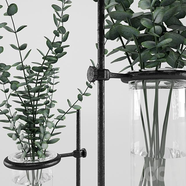 Eucalyptus_In_Laboratorium_Jar