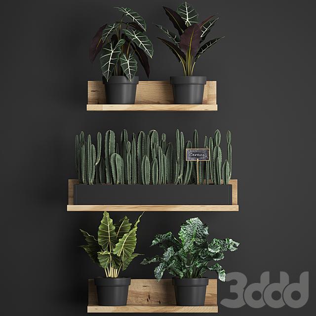 Коллекция растений 399.