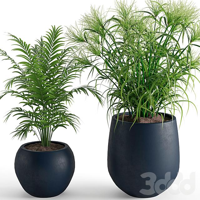 Houseplant 40