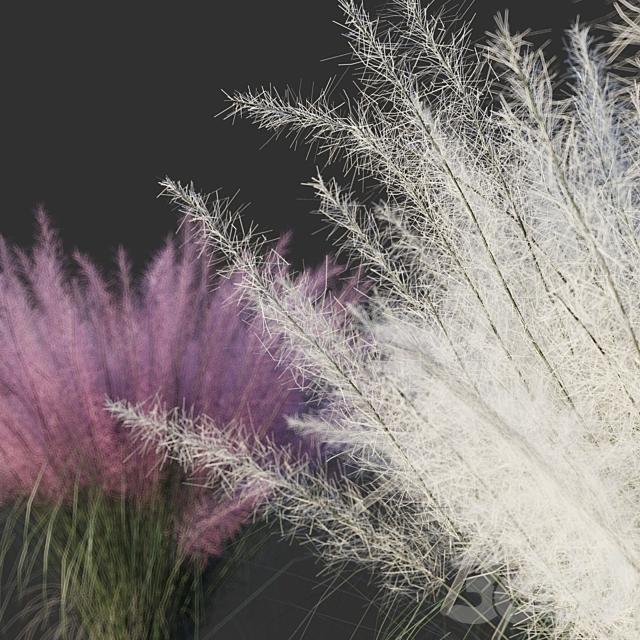 Мюленбергия волосовидная/Muhlenbergia capillaris