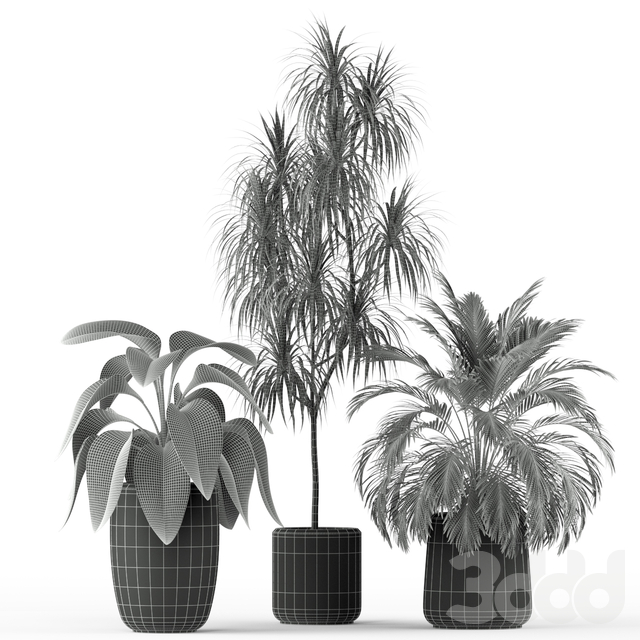 Plants collection 211