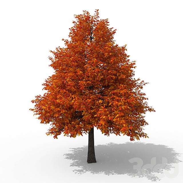 Дерево лесная Нисса No 2