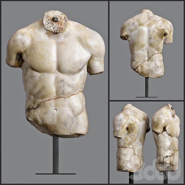 DISCOPHORUS TORSO