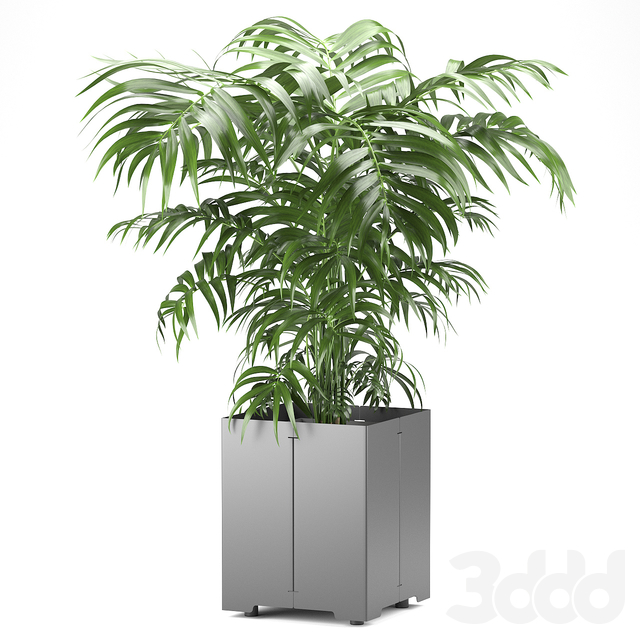 Palm tree in a pot 03 (CAPE Collection)