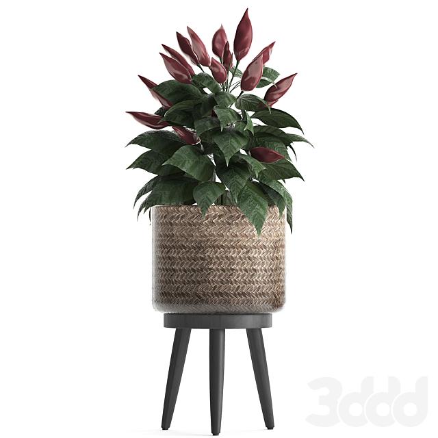 Коллекция растений 424.
