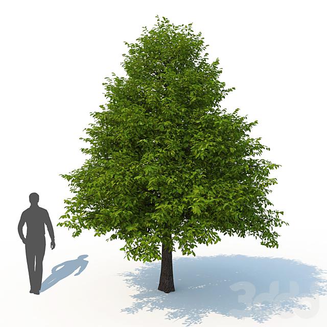 Дерева лесная Нисса No 1