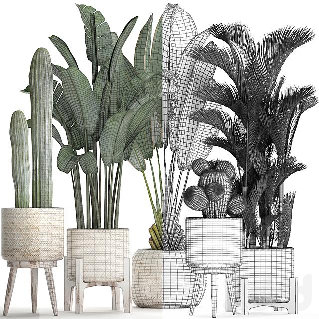 Коллекция растений 426.