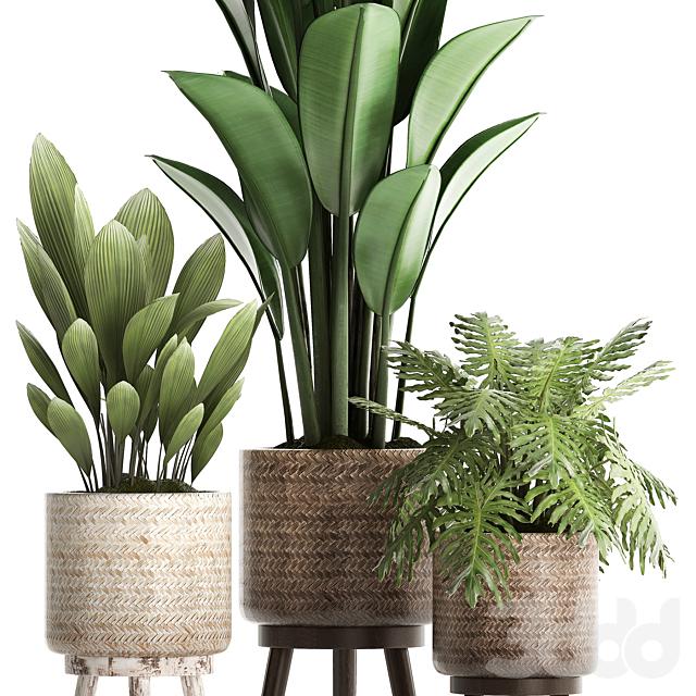 Коллекция растений 428.