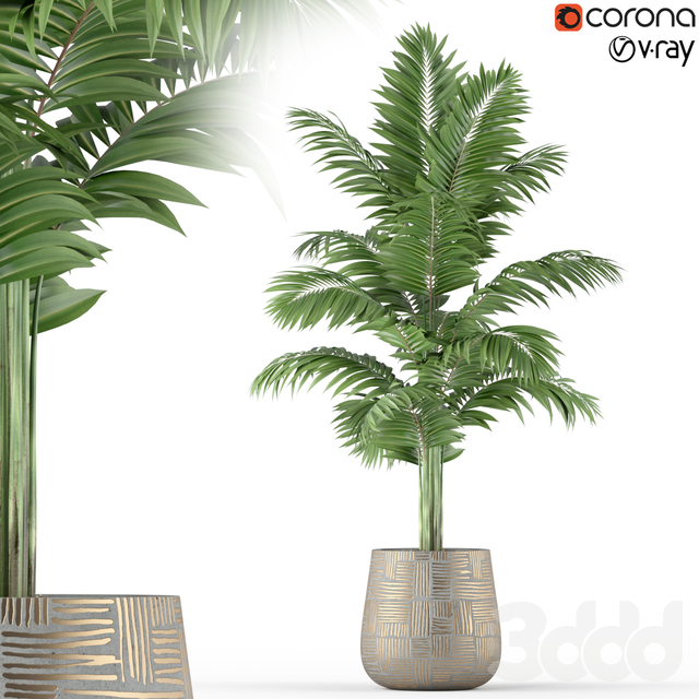 Plants collection 221