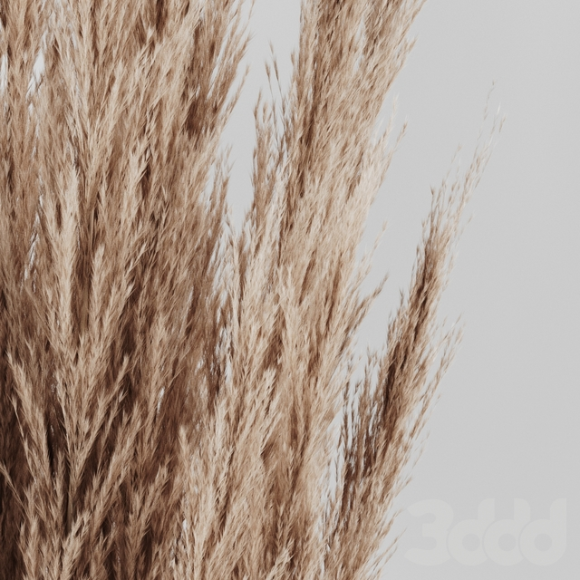 A bunch of Pampas 4