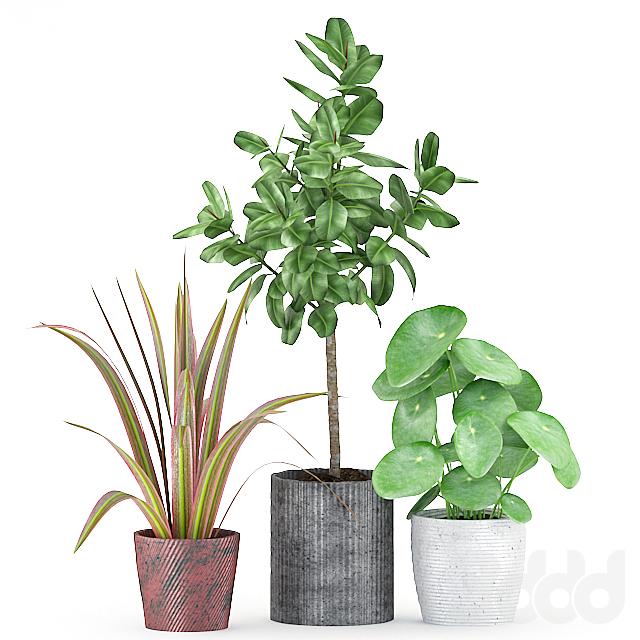 Plants 172