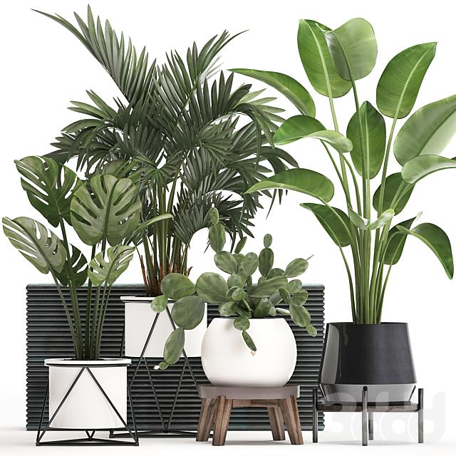 Коллекция растений 448.