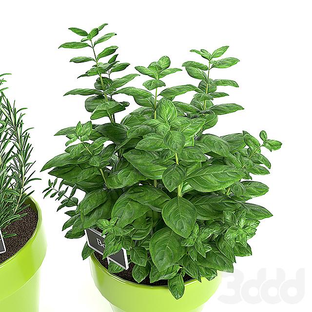 Растения для кухни 1