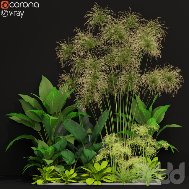 Plants collection 241
