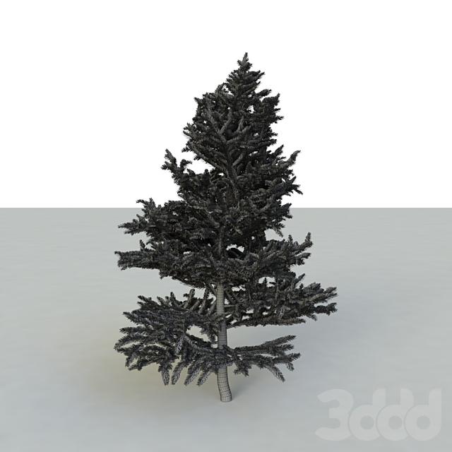spruce v2