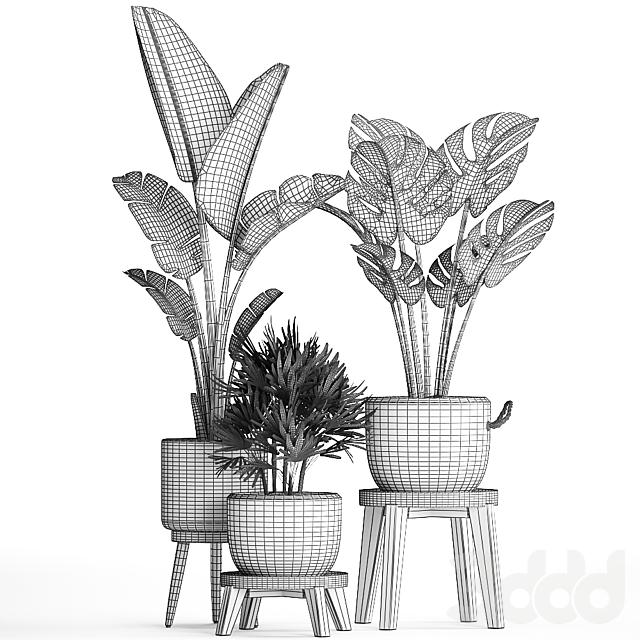 Коллекция растений 457.