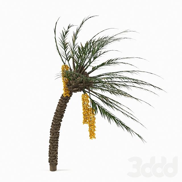 Palm_Tree 02