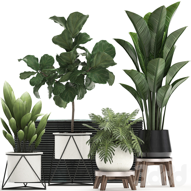 Коллекция растений 460.