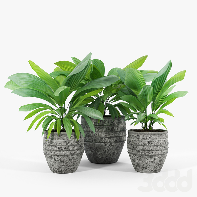 Knisely 2-Piece Pot Planter Set 02