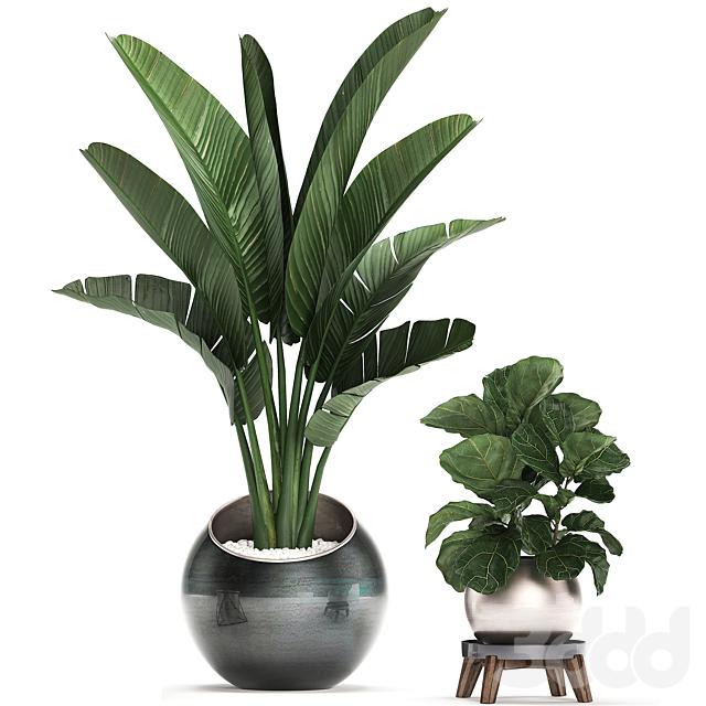 Коллекция растений 464.