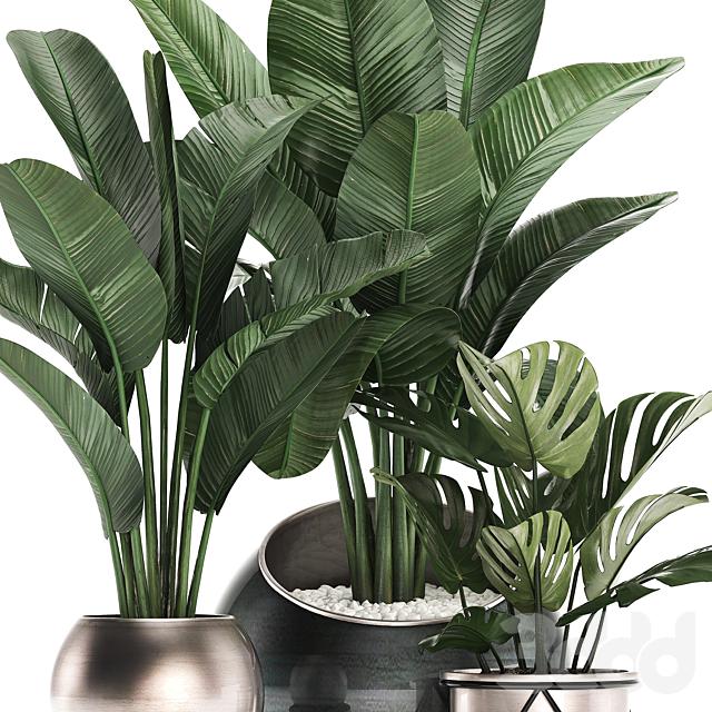 Коллекция растений 465.