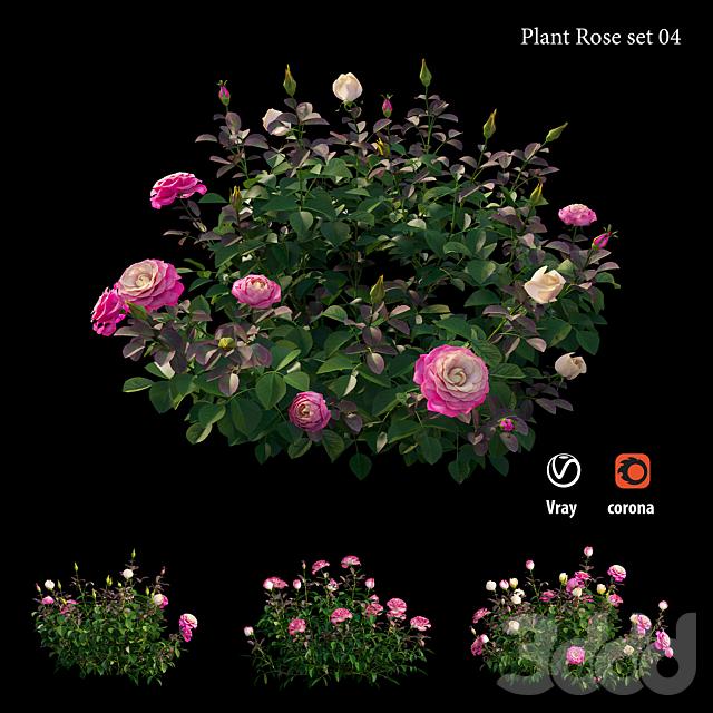 Plant rose set 04
